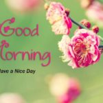 flower good morning images pictures photo wallpaper pics free hd