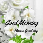 flower good morning images wallpaper pictures photo hd download