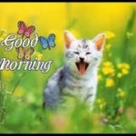 latest funny good morning images photo wallpaper pics download