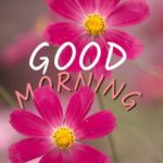 new nice good morning images photo pics pictures free hd
