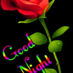 Red rose good night images wallpaper pictures photo pics HD