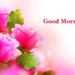 flower good morning images photo wallpaper pictures free hd
