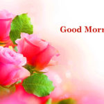 Cute flower good morning images photo wallpaper pictures free Download