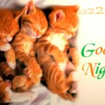 funny good night images for lover wallpaper photo pictures free hd download