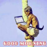 funny good morning images wallpaper pictures pics download