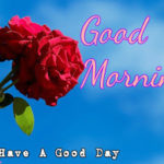 nice flower good morning images wallpaper pics download hd