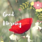 flower good morning images pictures photo free download hd