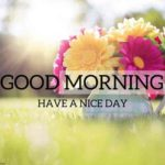 very nice flower good morning photo wallpaper pictures download