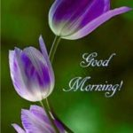 good morning images pictures photo wallpaper download