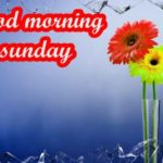 good morning images pictures wallpaper photo hd download