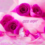 Beautiful rose good night images wallpaper pictures photo pics hd download