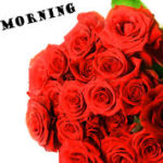 Red rose good morning images wallpaper pictures free hd