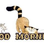 funny good morning images pictures photo wallpaper download
