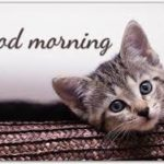 latest funny good morning images pictures photo download hd