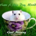 nice funny good morning images photo pictures wallpaper download