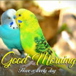 best bird good morning images wallpaper pictures photo hd download
