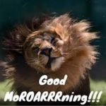 funny good morning images pictures wallpaper photo download hd