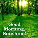 best nature good morning images photo pics wallpaper free download