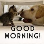 funny good morning images for best friend pictures photo wallpaper hd
