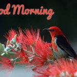bird good morning images pictures wallpaper download hd