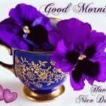 flower good morning images pics photo wallpaper pictures hd download