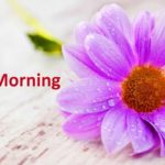 flower good morning images pics photo wallpaper free hd