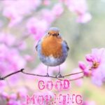 bird good morning images photo pic pictures hd