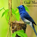 bird good morning images pictures wallpaper photo hd
