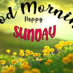 new nature good morning happy Sunday images wallpaper pictures