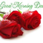 Red rose good morning images pictures wallpaper free hd