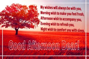 Good Afternoon Images Photo Pictures Download For Whatsaap