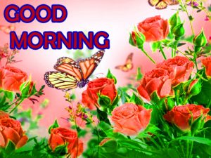 Flowers Good Morning Images Wallpaper Pictures Download