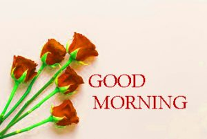 Good Morning Images Photo Pictures With Red Rose