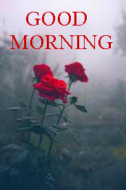 Good Morning Images Wallpaper Pictures Download With Red Rose