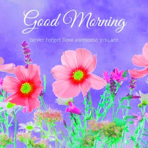 Flowers Good Morning Images Wallpaper Download