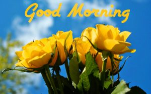 Good Morning Images Images With Flower For Whatsaap