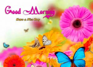 gd mrng Wallpaper Images With Flower