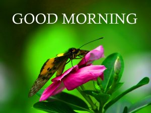 Good Morning Images Wallpaper For Whatsaap Download
