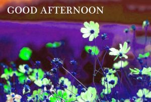 Good Afternoon Images Photo Wallpaper In HD