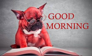Good Morning Images Photo Pictures Free Download