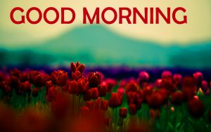 Flowers Good Morning Images Wallpaper Pics Download