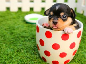Cute dps Images Photo Download