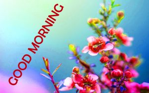 Flowers Good Morning Images Wallpaper Pictures Free Download