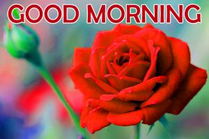 Flowers Good Morning Images Pics With Red Rose