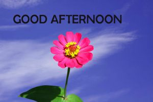 Good Afternoon Images Wallpaper Pictures Free Download