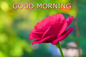 gd mrng Images Photo Pics With Red Rose