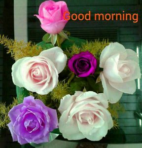 gd mrng Images Wallpaper Pics Download With Flower