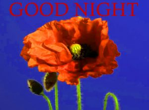 Good Night Images Photo Wallpaper Pics Download