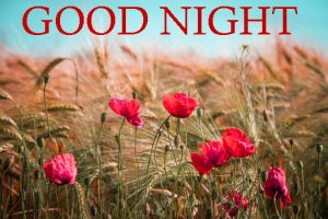 Good Night Images Photo Pics With Flower