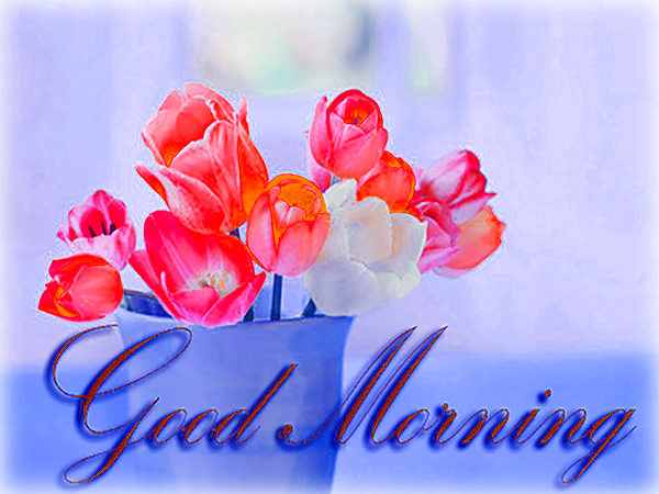 goodsa-morning-Flower-Good-
